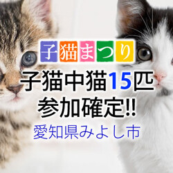 子猫中猫15匹参加確定【譲渡会緊急開催】