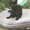 5か月の女の子♡カギ尻尾の黒猫ちゃん 避妊手術済み