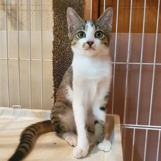【トライアル中】生後4~5か月の兄弟猫3匹