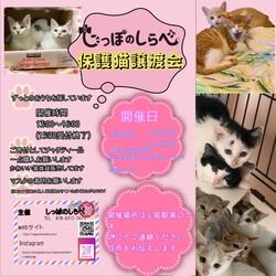 【猫】しっぽのしらべ第1回譲渡会