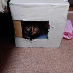飼い猫は見た!