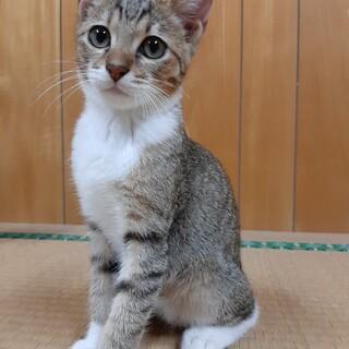 約4ヶ月きょうだい猫1番の甘えっ子キジトラちゃん