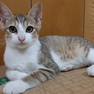 約4ヶ月きょうだい猫おっとり美猫ちゃん