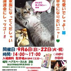 猫の譲渡会「加古川」 サムネイル1