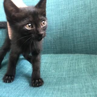 黒猫 生後約4週間です