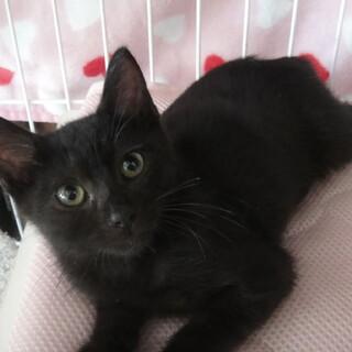 元気な黒猫☆ソルくん 3カ月くらい