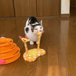 保護猫&保護犬の譲渡会 サムネイル2