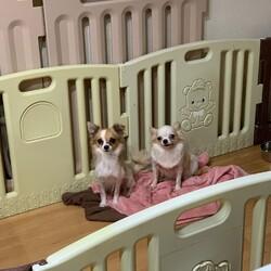 保護猫&保護犬の譲渡会 サムネイル3