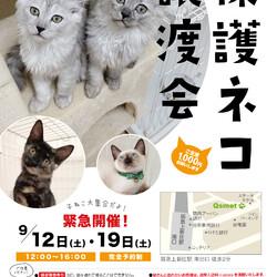 第89回 保護猫カフェくすめっと定例里親譲渡会