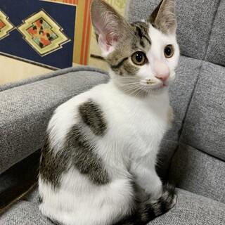 可愛い子猫の姉弟