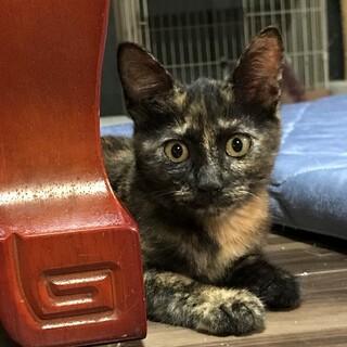 智胡(チコ)ちゃん  4ヵ月くらいの女の子