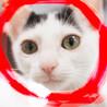 生後3.5ヶ月♀白黒♡猫初心者向けラビたん