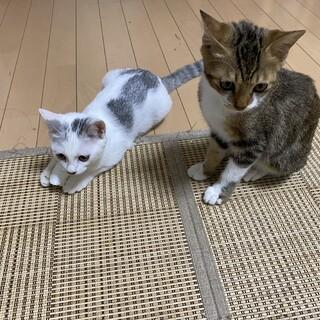 保護猫ちゃんの飼い主募集