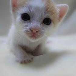 子猫祭りだよ~  とだニャン保護猫里親会 サムネイル3