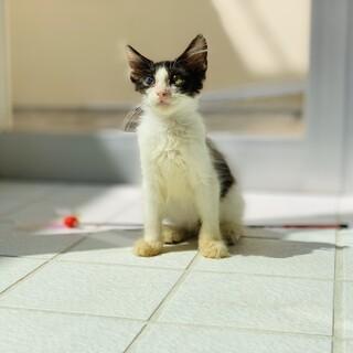 可愛いの伸びしろが満載な子猫です。女の子。