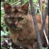 横浜 避妊済み 愛らしいサビ猫ちゃんの保護