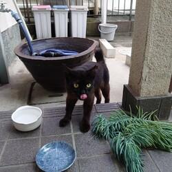 保護猫チョコちゃんとの出会い