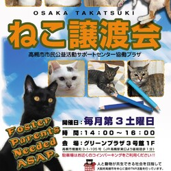 予約制)9/19子猫の譲渡会を開催します