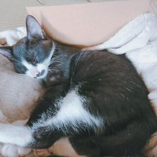 黒おひげの靴下猫