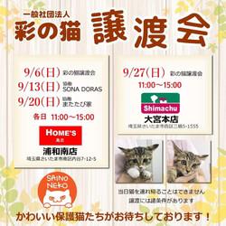 彩の猫☆譲渡会