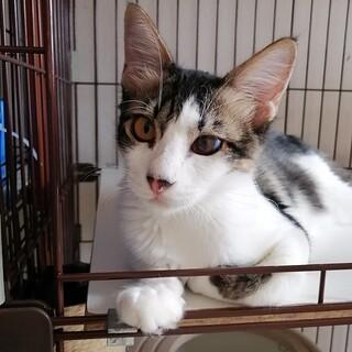 呼んだらお返事、超甘えたの抱っこ猫ロールちゃん