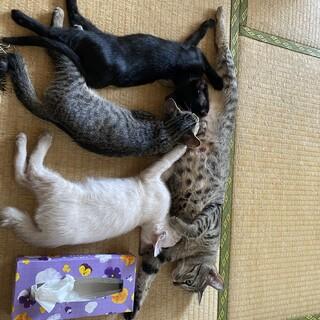 とても可愛い3兄弟です♡