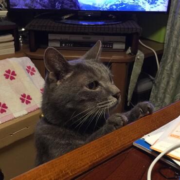 「ばーさん晩飯はまだかいなぁ」『嫌ですよ雷じいさんお皿にハゼがあるでしょう!』「鯛…は?」