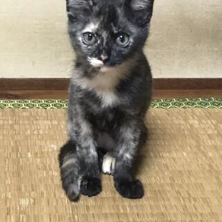 3~4ヶ月の保護猫です