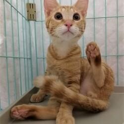 ねこチュー第3回猫の譲渡会 サムネイル2