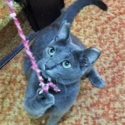 ねこチュー第3回猫の譲渡会 サムネイル3
