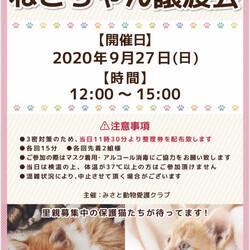 三郷市(⑉•ェ•⑉)保護猫譲渡会 サムネイル1