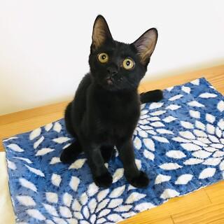 【お見合い随時】猫にも人にもフレンドリーな黒猫女子