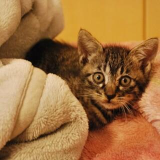 台風前に保護したキジ子猫さん