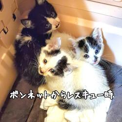 「ボンネットから救出した子猫3匹」サムネイル1