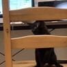黒猫ラスクは、家猫修行中です サムネイル5