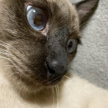 サファイヤブルーの瞳