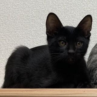 2020/6/20生まれの黒猫ちゃん