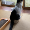 美人さんなハチワレ猫ちゃん☆ サムネイル6