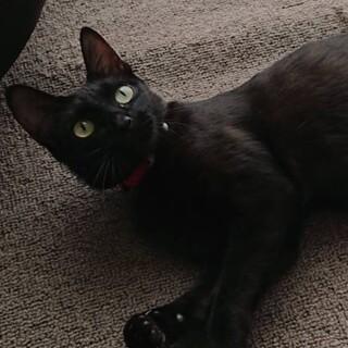 穏やかな黒猫ちゃん