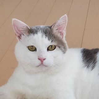 猫エイズのお友達を探している方いませんか?