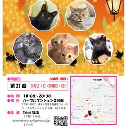 Sakai♥猫活(夜の譲渡会)