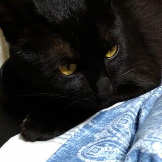 艶々、元気な可愛い黒猫さん!!