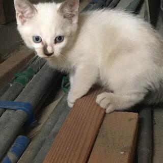 かわいい色の子猫です