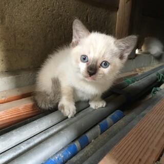 かわいい子猫です