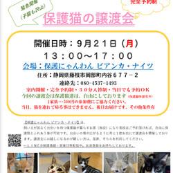 【緊急開催】子猫沢山の譲渡会(予約制) サムネイル1