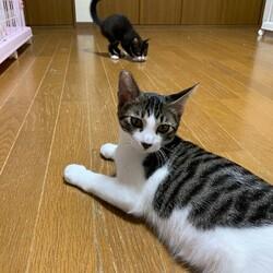 【緊急開催】子猫沢山の譲渡会(予約制) サムネイル2