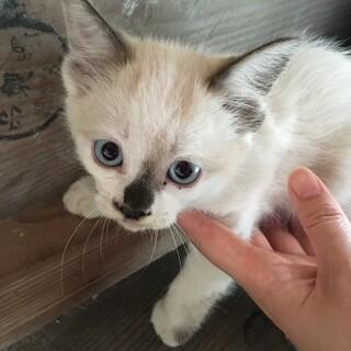 かわいい色の子猫