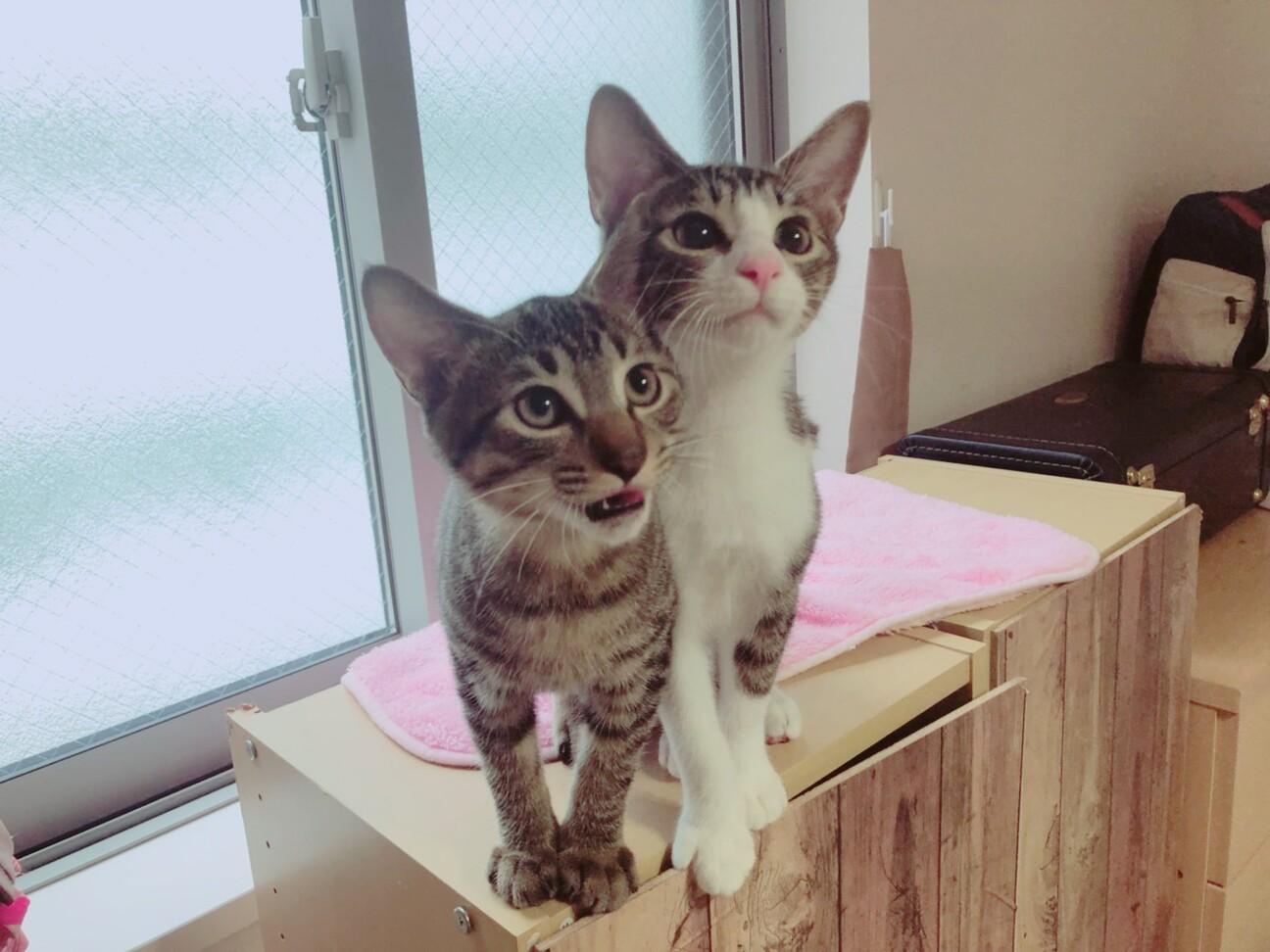 ねこ けん 千葉 支部 「ねこけん千葉支部」を含む猫の里親募集情報 ::...