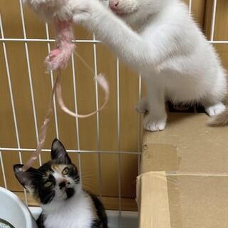 仲良しな可愛い子猫! もな(♂️)&ミミ(♀)