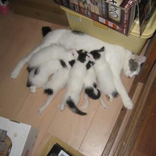 6匹の2か月以下の子猫